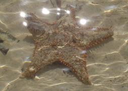 starfishclose