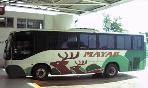 mayab bus green