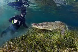dive crocodile
