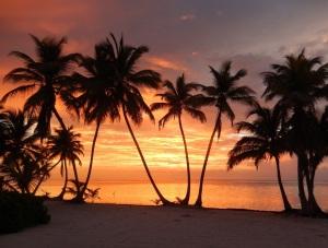 casona-palms-sunrise